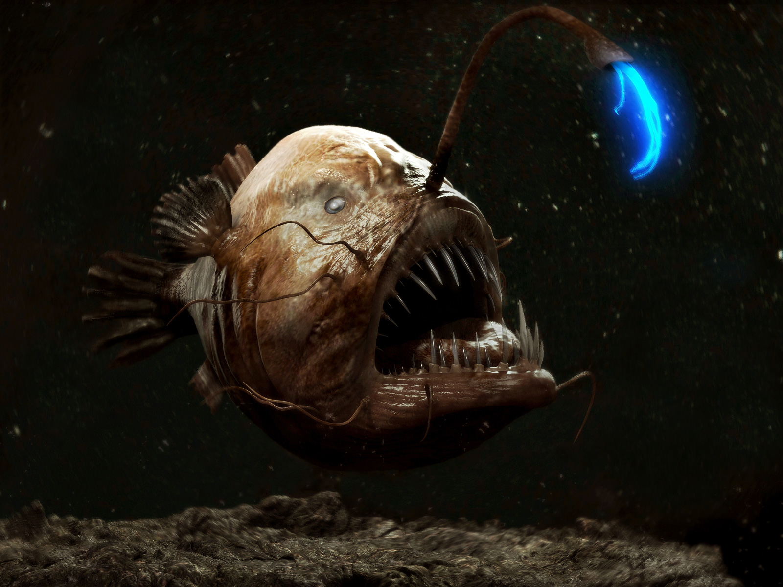 Angler fish by antonio peres and marcos amaro brazil for Where do angler fish live
