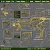 The Skeleton T-Rex ( Creature Modeling )