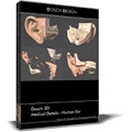 Human Ear Model
